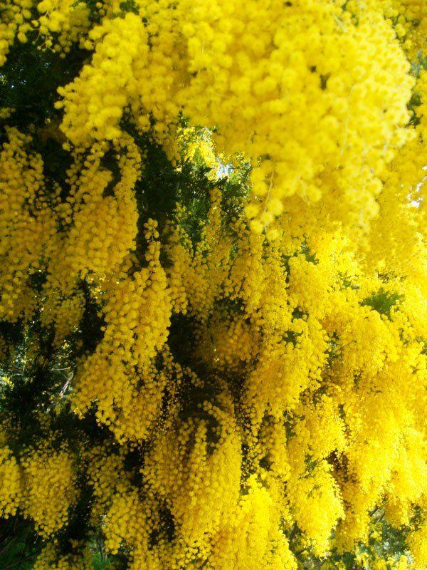 Un jardin odorant | Planter des fleurs, Fleurs odorantes et ...