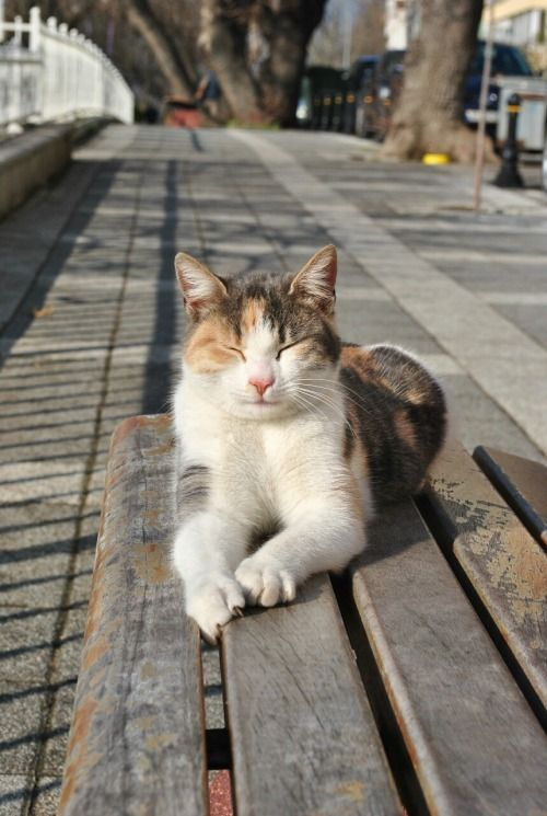 Enjoying a sunny winters day... by Captainkatu34 on tumbler. Visit this site to see more beautiful photos of cats of Istanbul and Turkey.