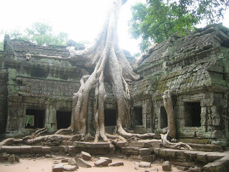 Banyan Tree at Ta Prohm, Angkor (image)