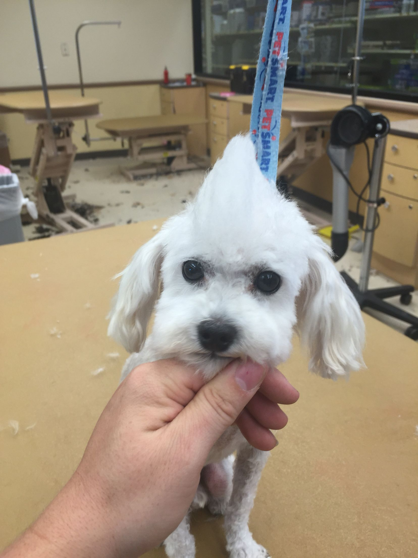 First Mohawk Dogs Pup Animals