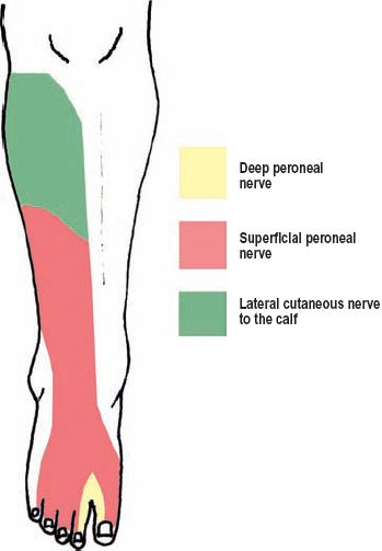 Image Result For Sensation Of Dorsum Of Foot Anatomy Pinterest