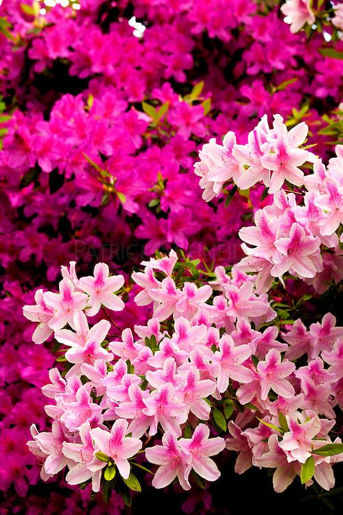 Spring flowers in north carolina photos favorite places spaces spring flowers in north carolina photos mightylinksfo