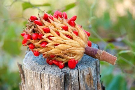 How To Grow A Magnolia Tree From Seeds Dogwood Trees Magnolia