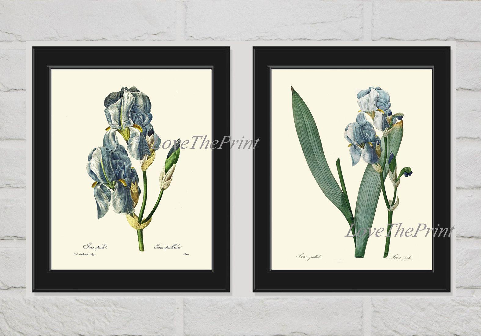 Blue Iris Flower Wall Art Print Set Of 2 Prints Beautiful Etsy Art Print Set Flower Wall Art Botanical Prints