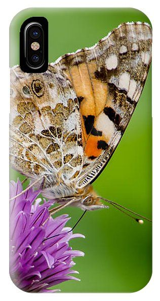 Painted Lady II  The beautiful butterfly Painted lady or Cosmopolitan (Vanessa cardui) loves the nectar in the flowering chives, Uppland, Sweden By Torbjorn Swenelius