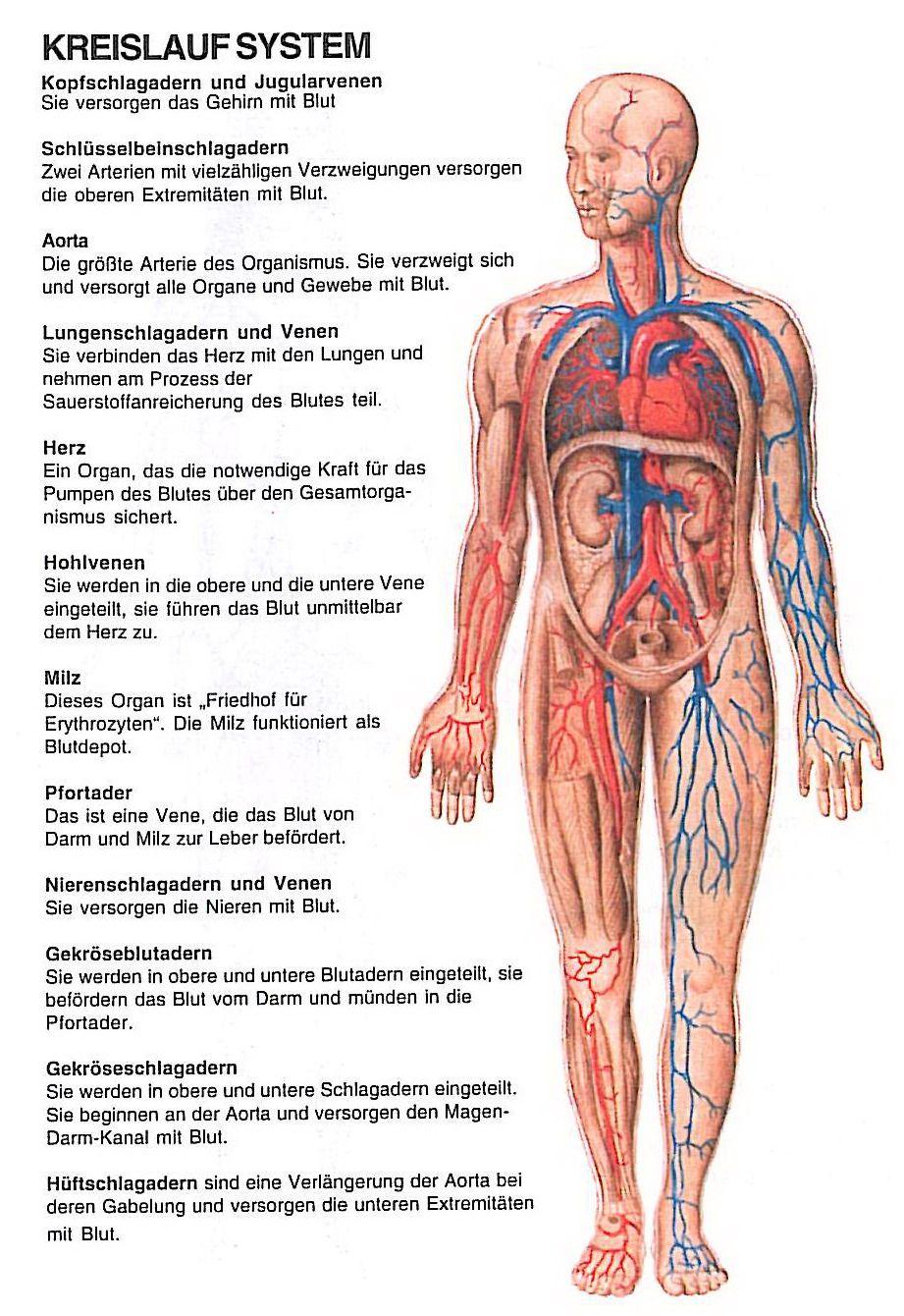 kreislauf | Gesundheit | Pinterest | Kreislauf, Medizin und Gesundheit