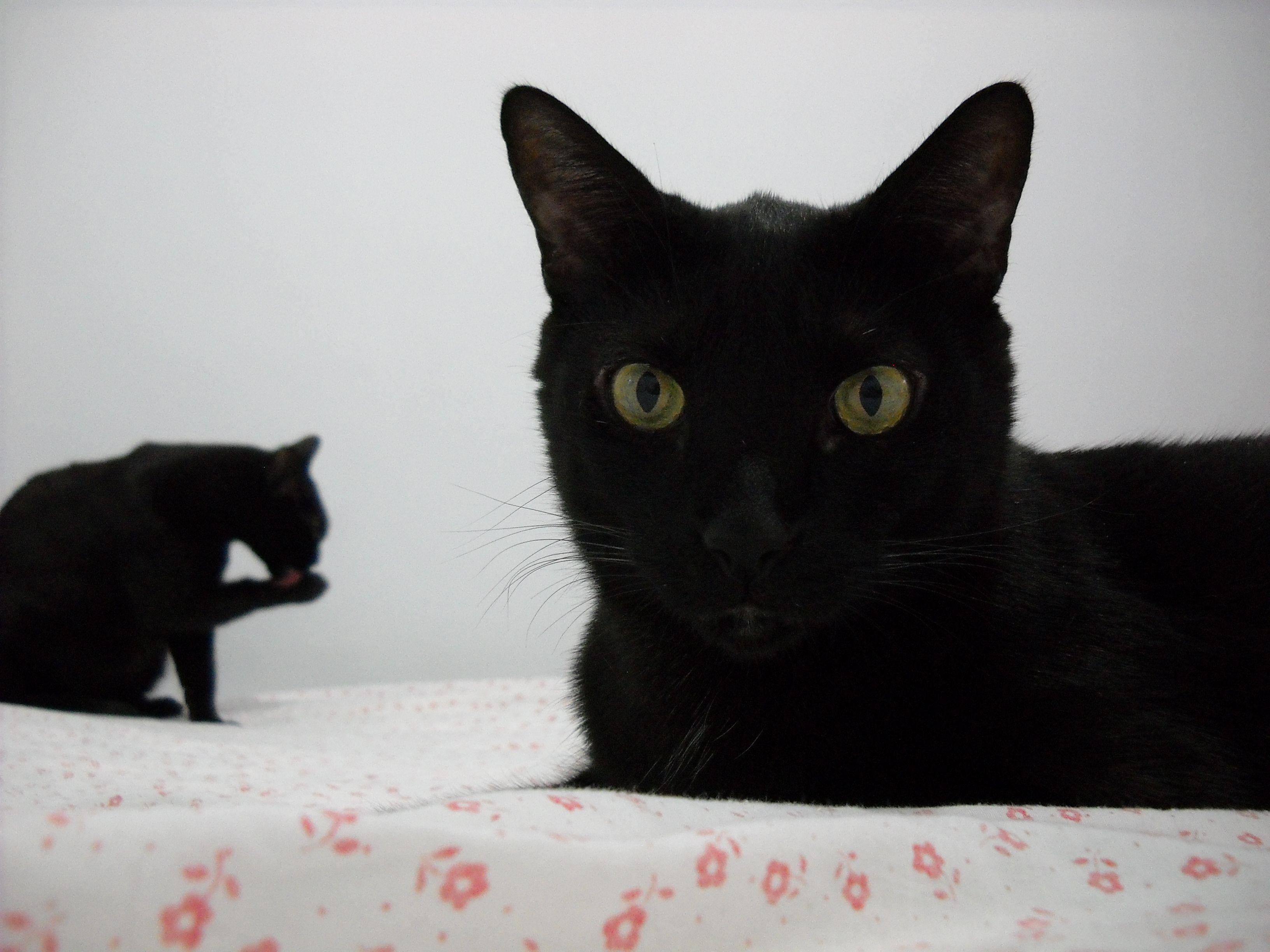 My black beauties  (ph.: Taken by me)