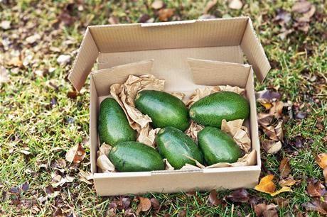 http://lib.farmhousedirect.com.au/images/product/m/bacon-avocado-x6QZS.jpg