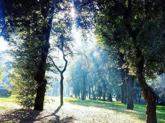 Villa Borghese, sunray