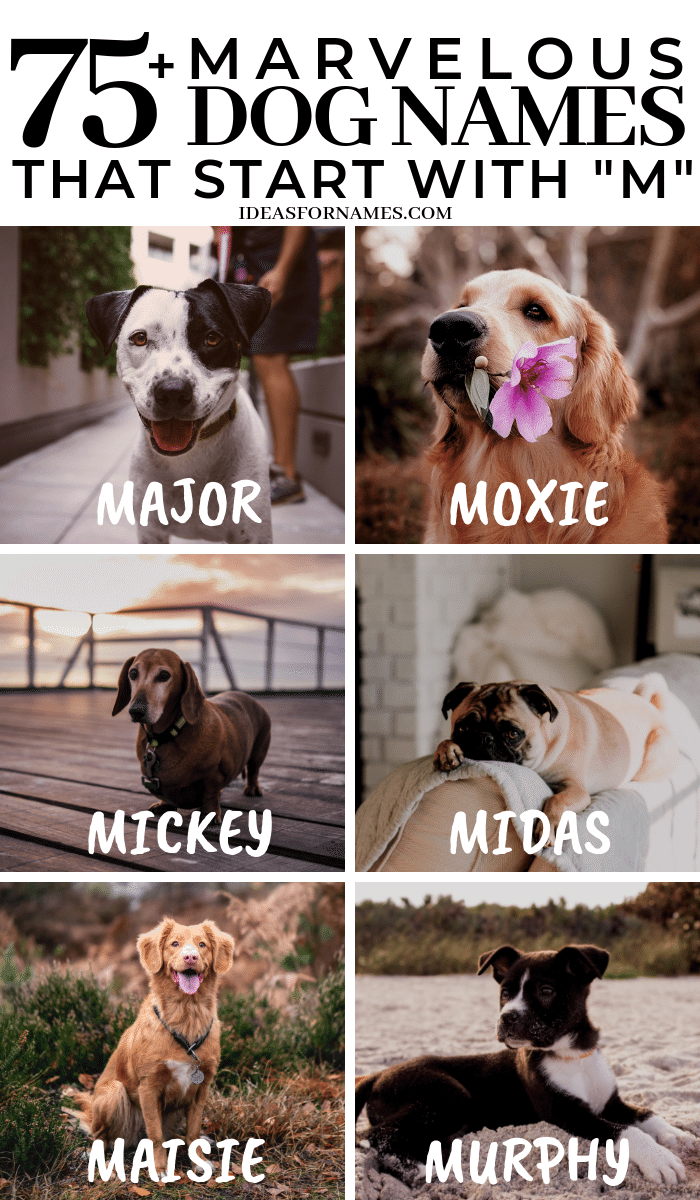 Marvelous Dog Names That Start With M Letter M Name For Puppy Dognames Dog Ilovedogs Newpuppy Newdog Dog Names Girl Dog Names Puppy Names
