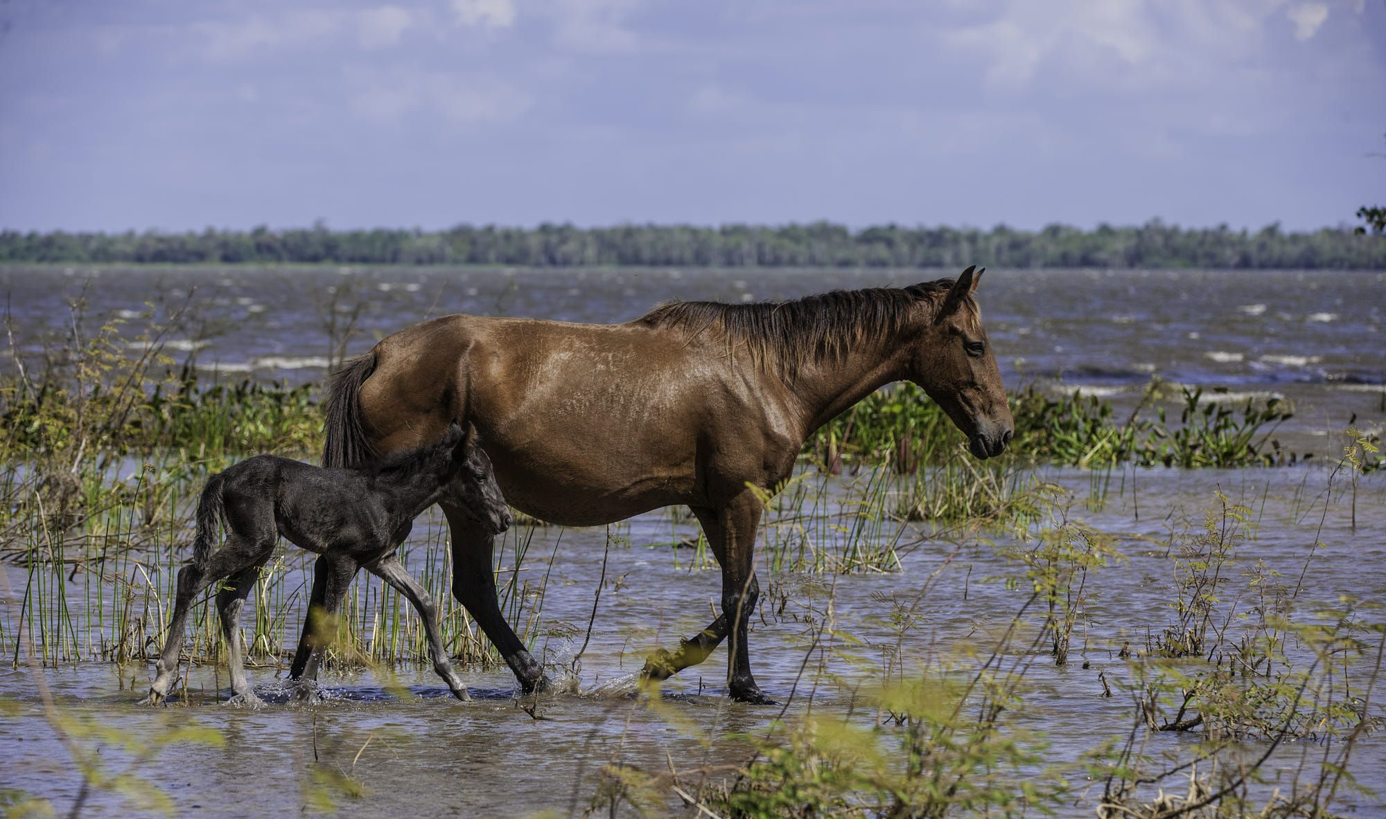 These horses live on the southern shores of Lake Nicaragua. Mum was watching every step.