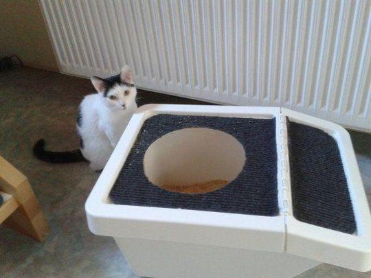 Ikea Recycling Bin To Diy Top Entry Litter Box Home