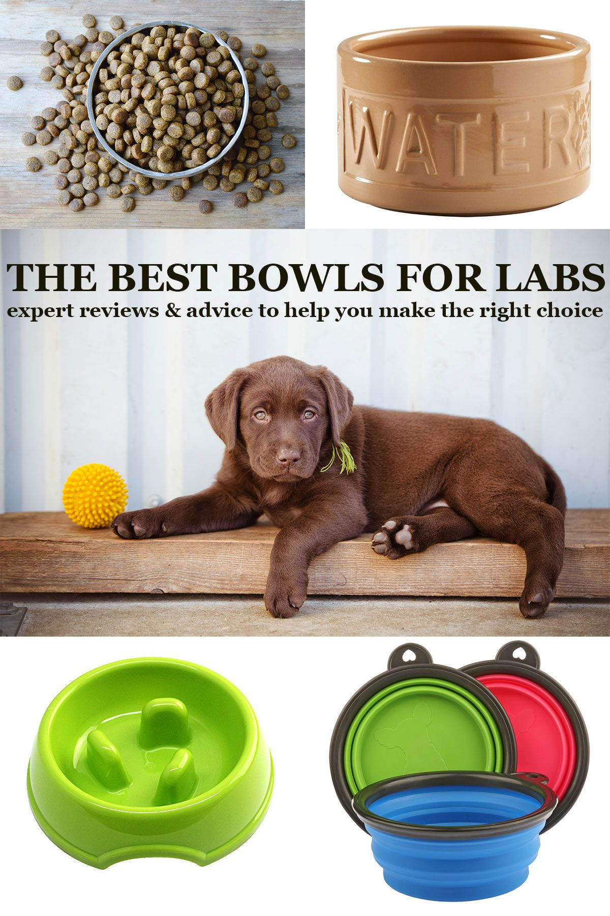 Best Dog Bowls Reviews Of Top Choices And Tips To Help You