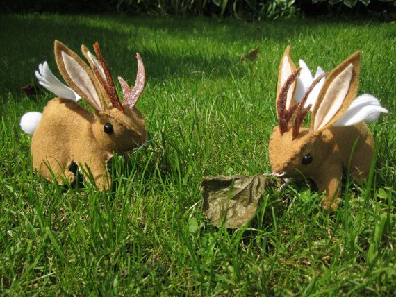 these are so cute i want one wolpertinger winged rabbit