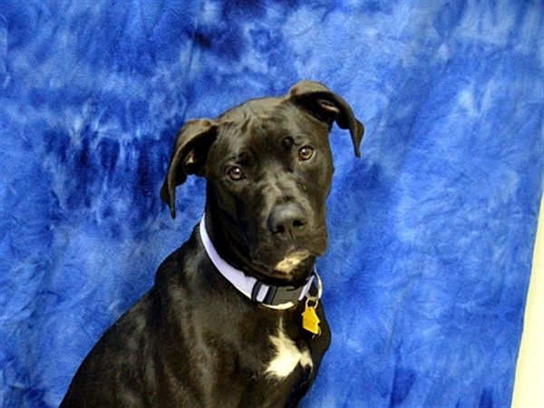 Delilah Oregon Humane Society Ohs Adoptions 22 Humane