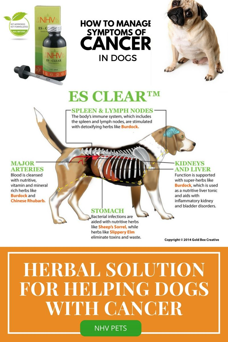 ES Clear™ for dogs Dog cancer, Worms in dogs, Mites on dogs