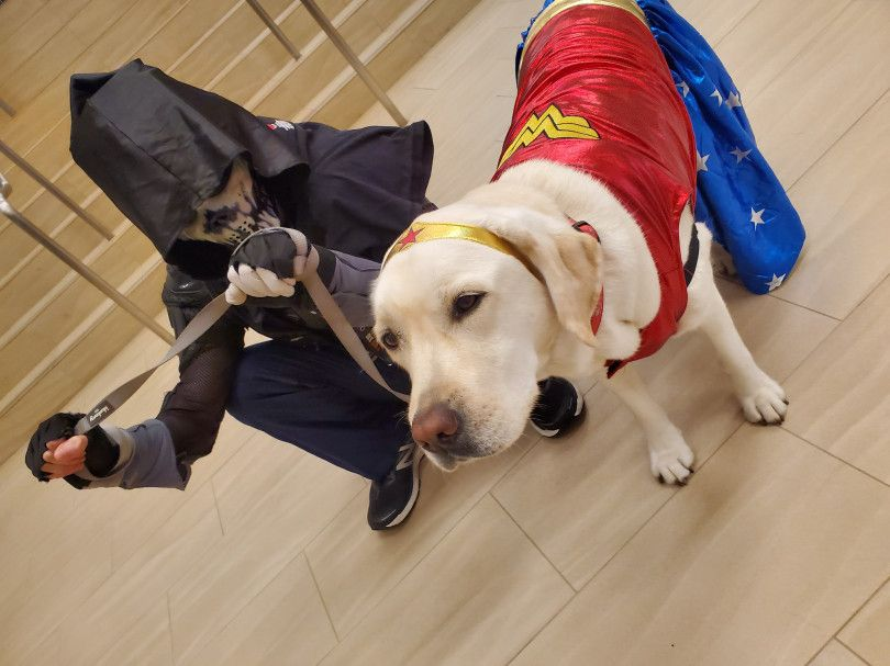 Comic Con 2019 Service Animals Are Superheroes At The Convention