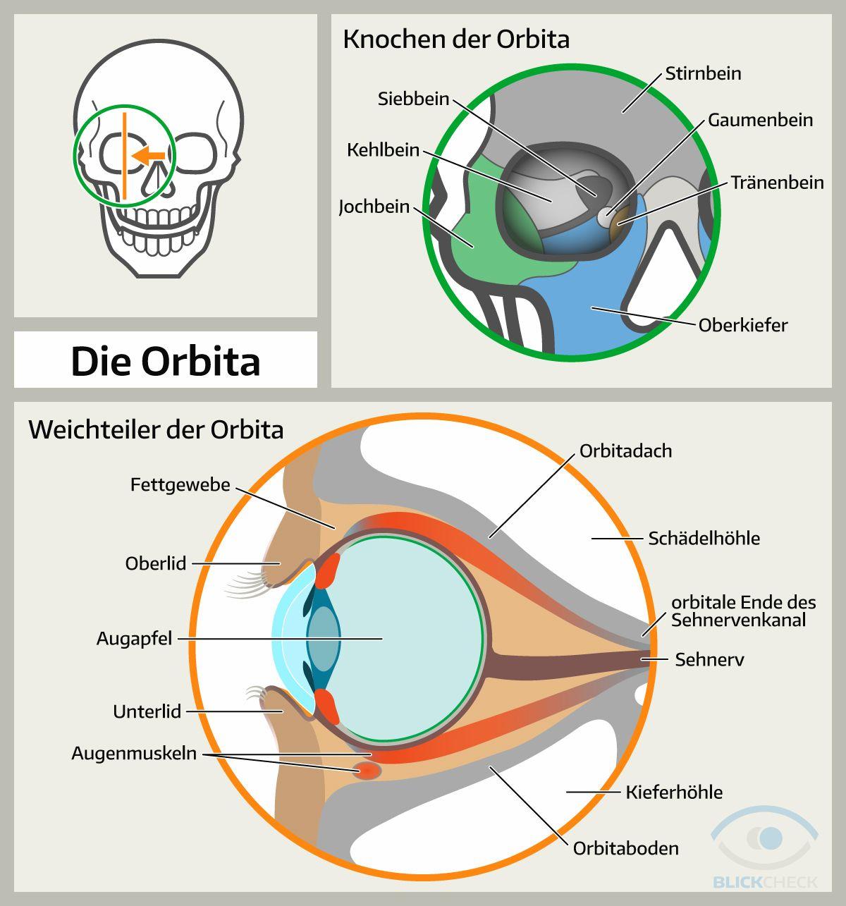 Die Orbita (Augenhöhle): Knochen und Weichteile. | Anatomie und ...