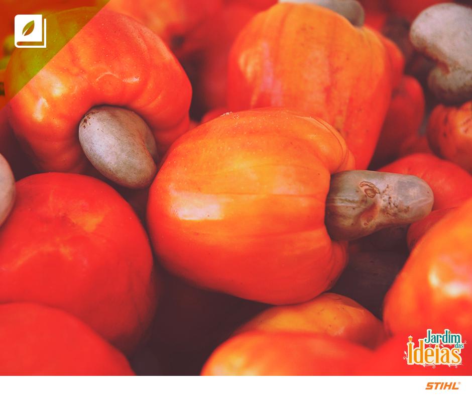O caju, por ser uma fruta nativa do Brasil, é encontrado