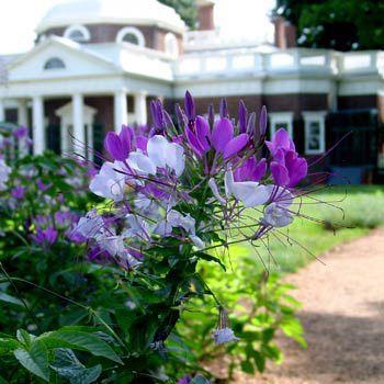At Monticello, Thomas Jefferson's Garden Is Still Growing ...  |Thomas Jefferson Garden Seeds