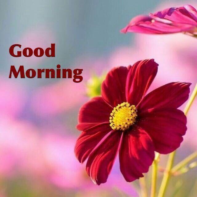 Good morning Mother Earth. Good Morning Friends, G Morning, Morning Wish, Happy