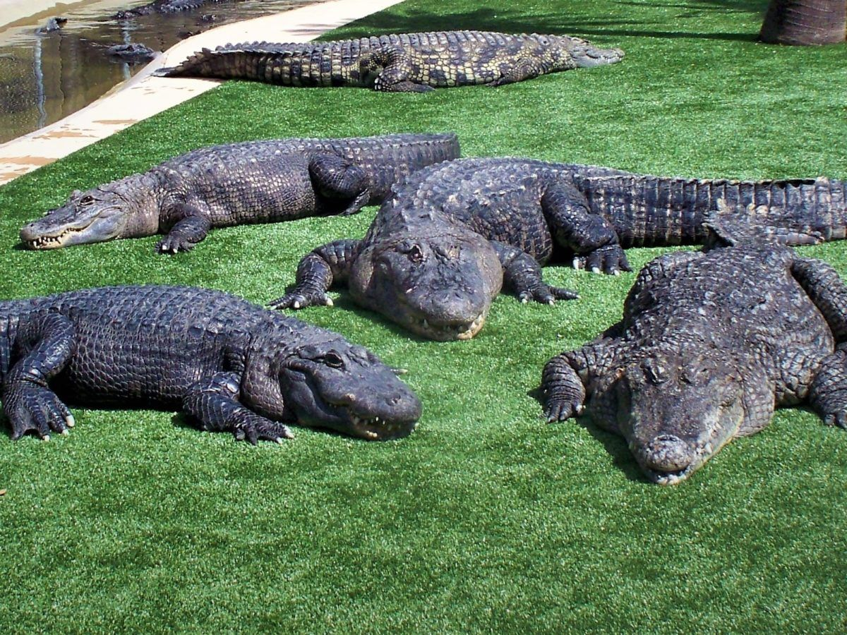 4b9ab28116d0a96f7b872ea695180720 - How Long Does Reptile Gardens Take