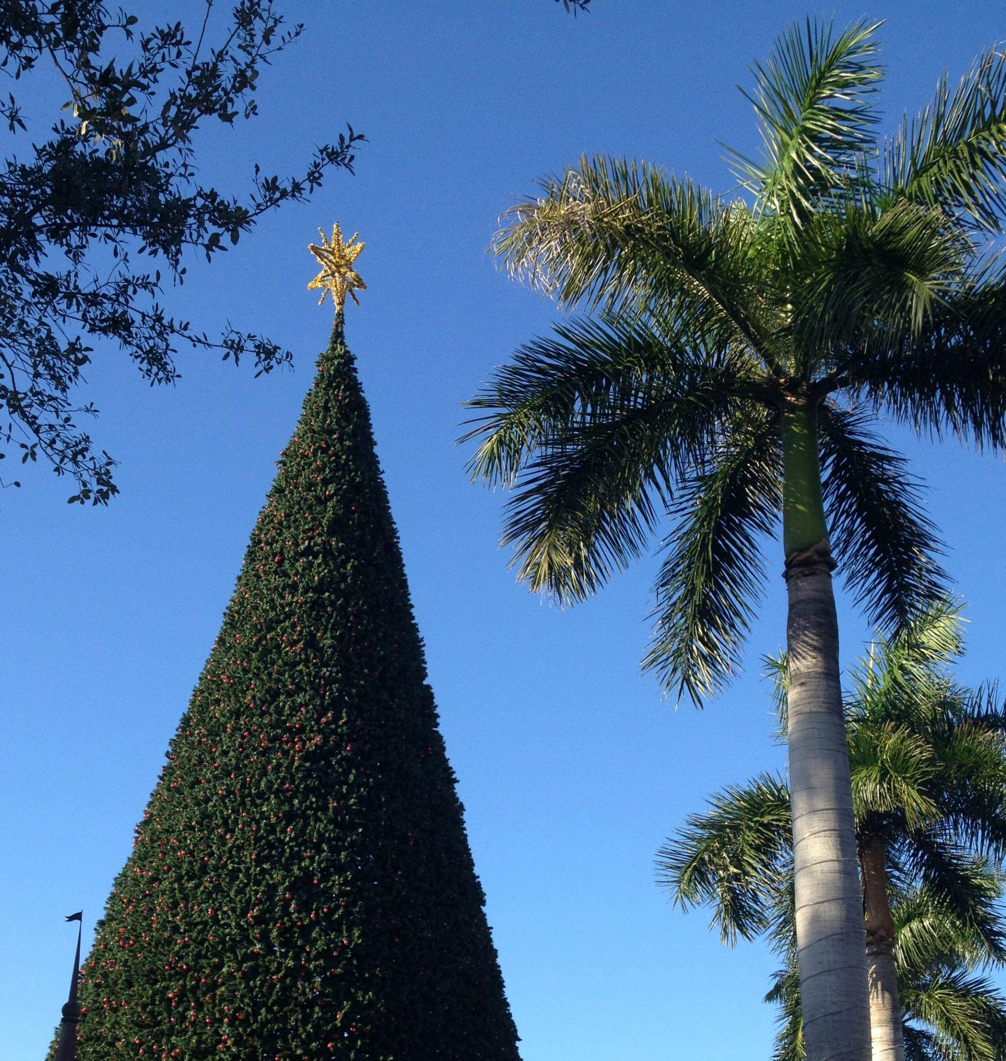 Stat atop the famous 100Foot Christmas Tree in Delray Beach FL