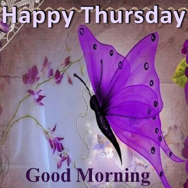 Happy Thursday Good Morning Butterfly Good Morning Quotes Good