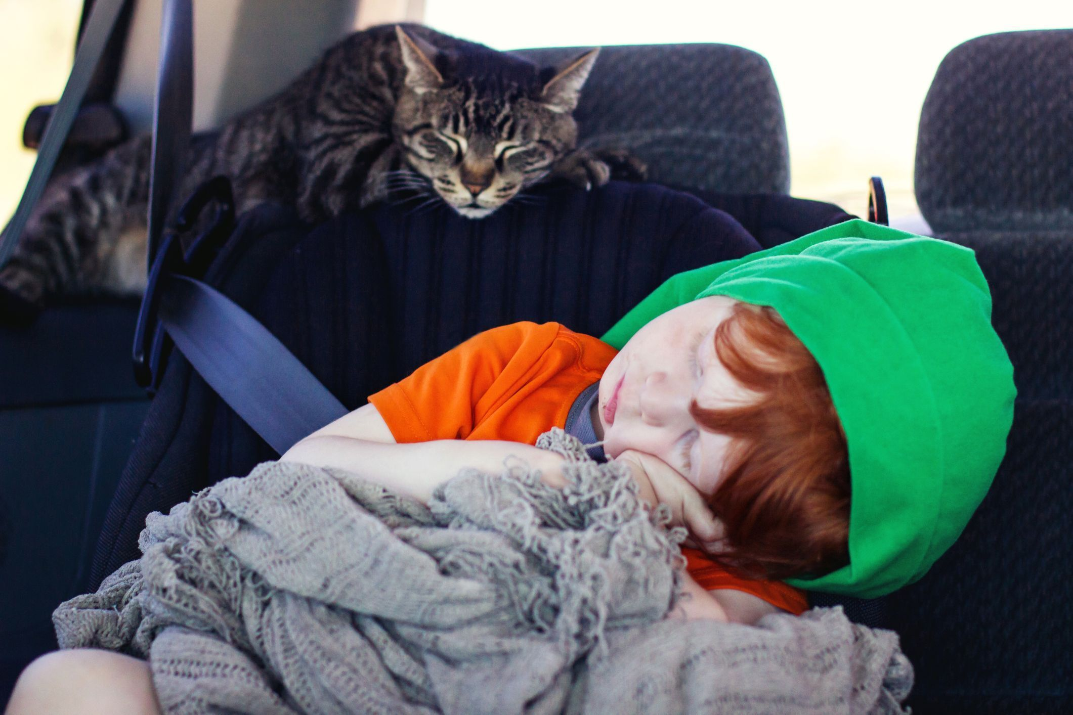 How to Prepare Your Cat for Car Travel (With images