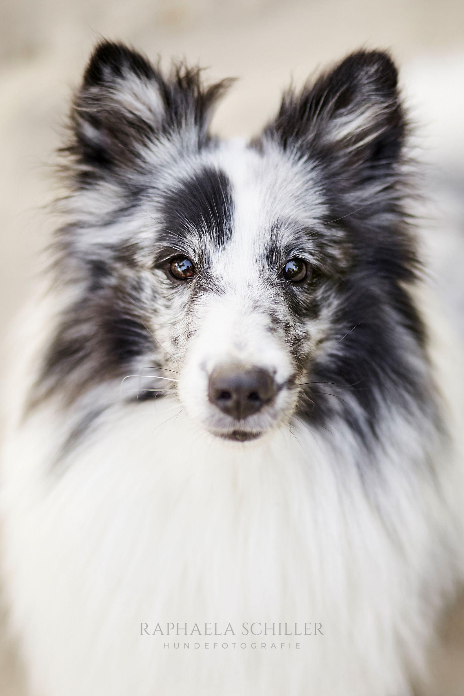Pin von Edith Fromont auf Entre chien et loup (mit Bildern