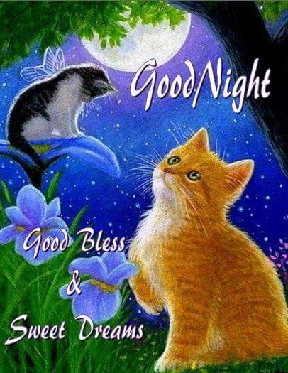 Pin by Tammy Hosey on GOODNIGHT & GOOD MORNING Cats