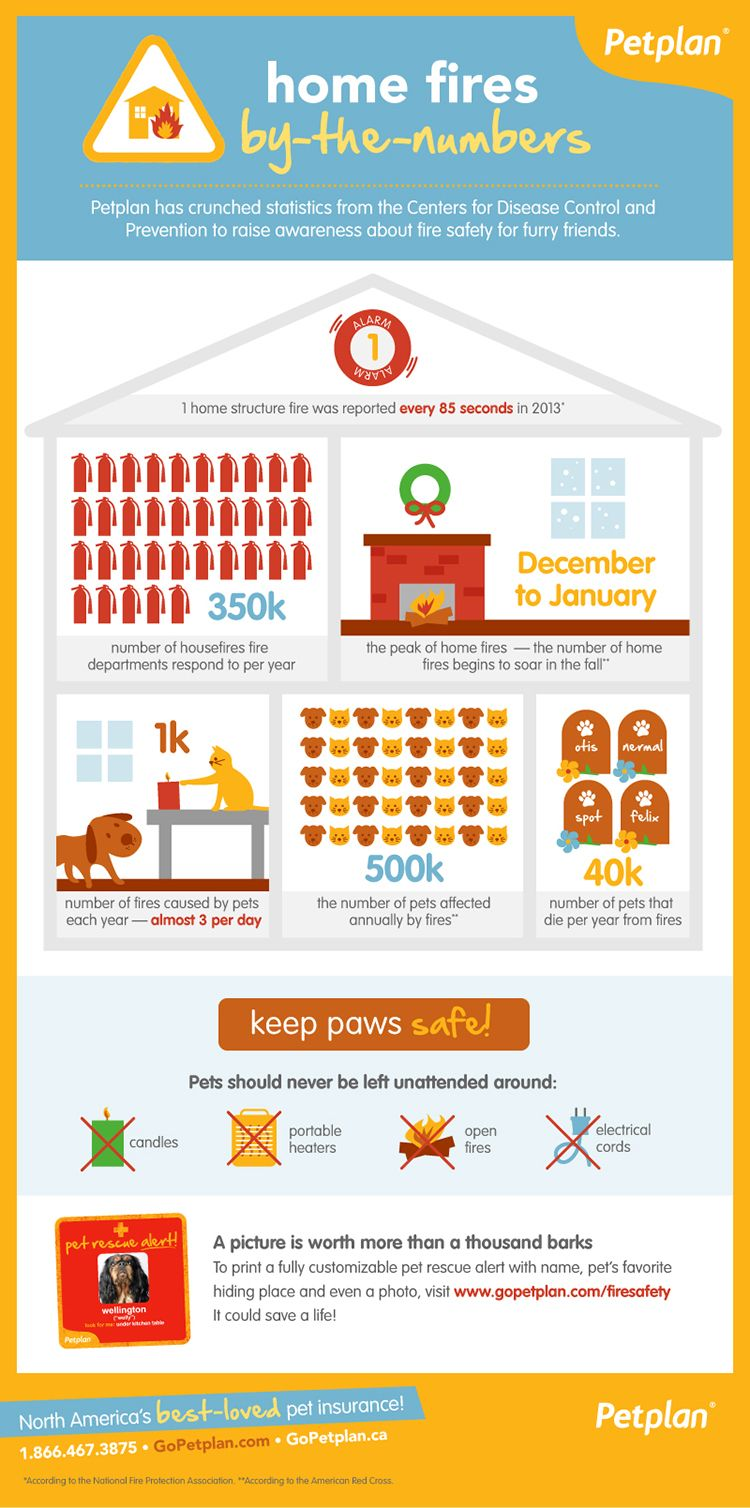 Over 500 000 Pets Are Affected By Fires Each Year Follow These