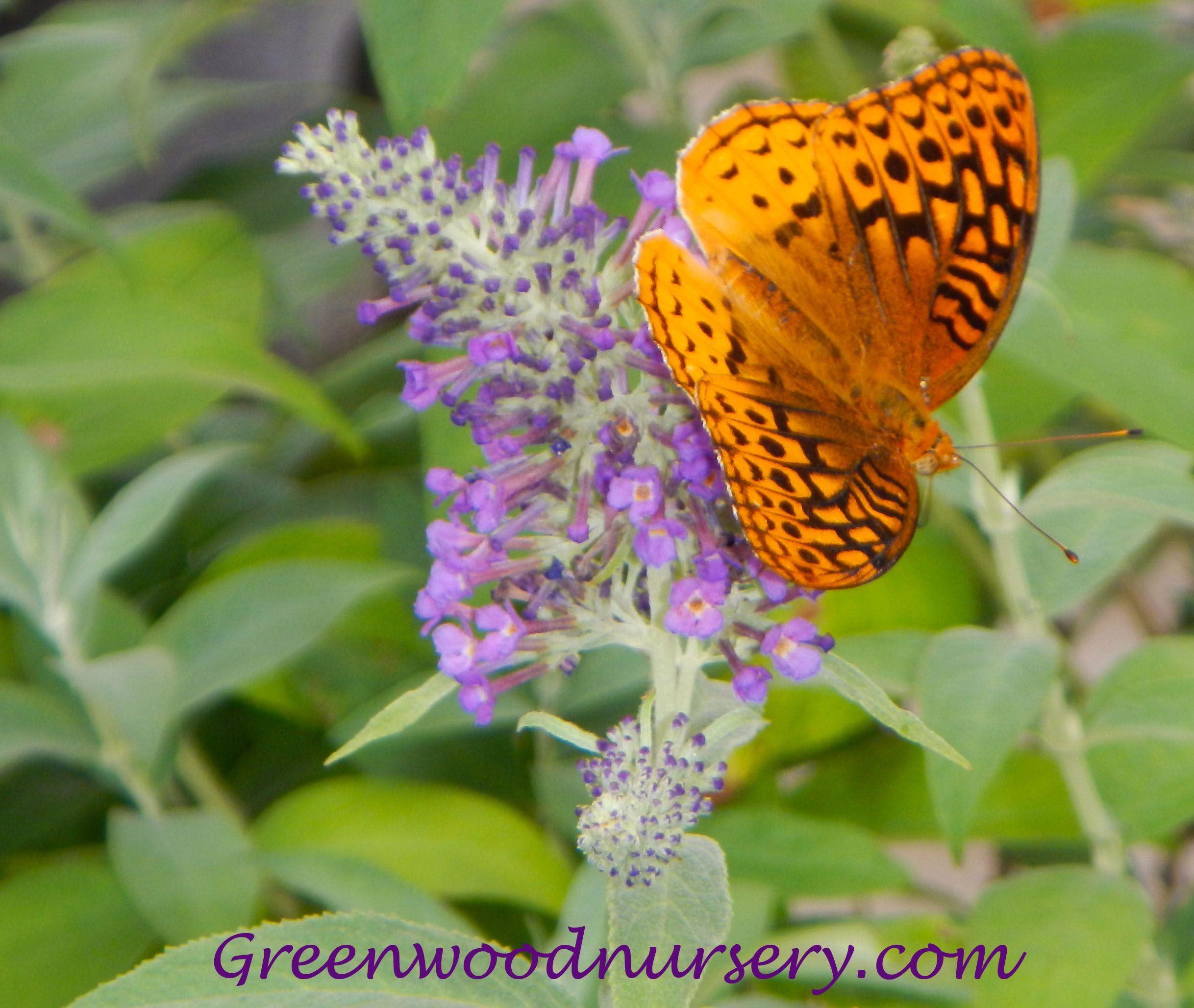 Butterfly Garden | Instant Butterfly Garden Plants Package    Fastgrowingtrees.ws
