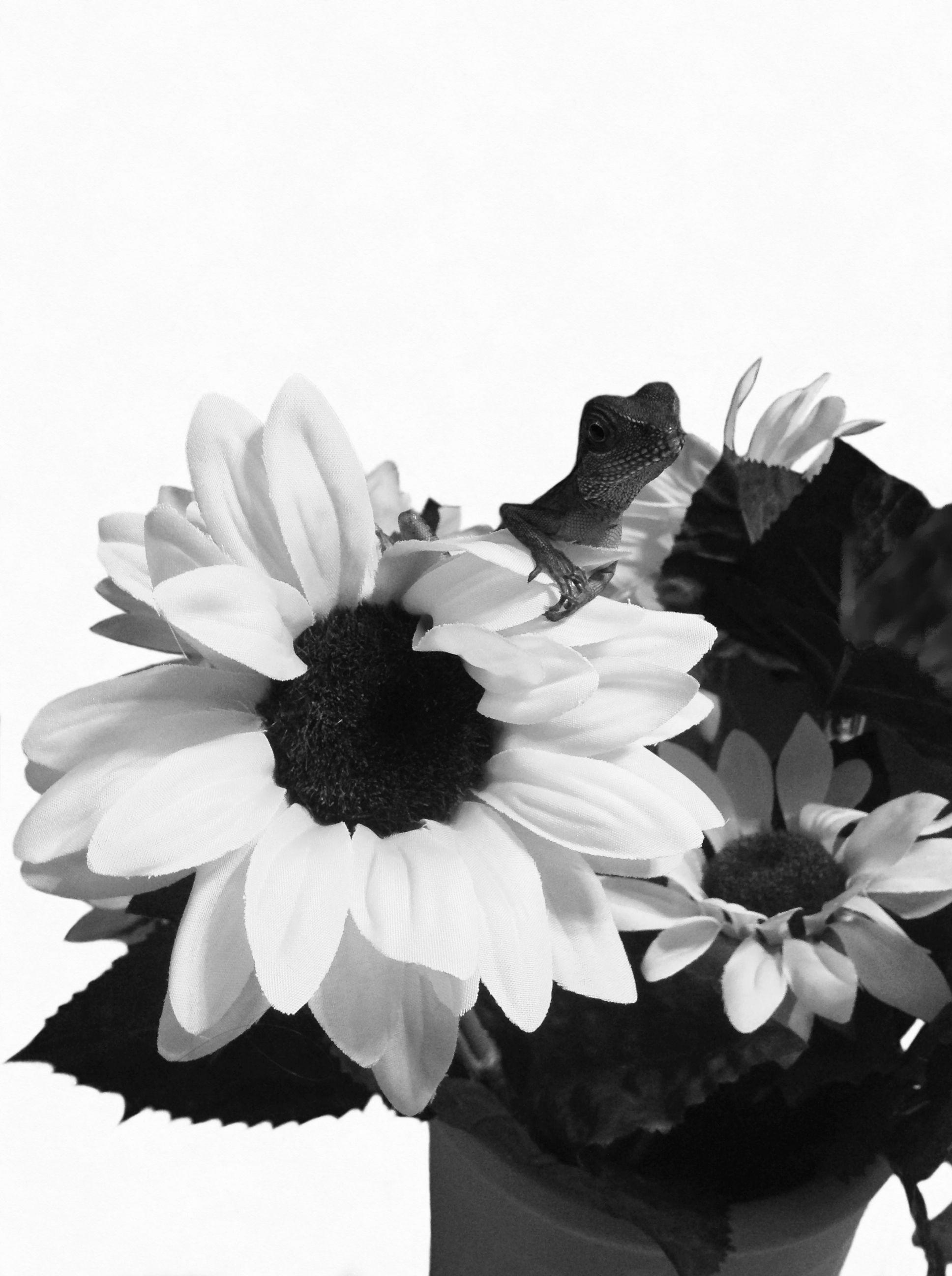 Black and White Thumbelina