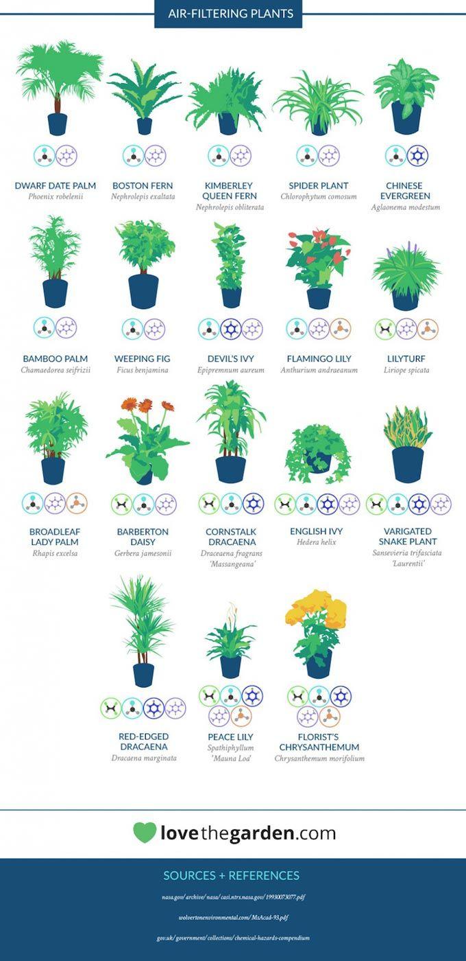 Piante Da Appartamento Lista.Lista Piante Nasa Giardinaggio Di Interni Piante Di Casa