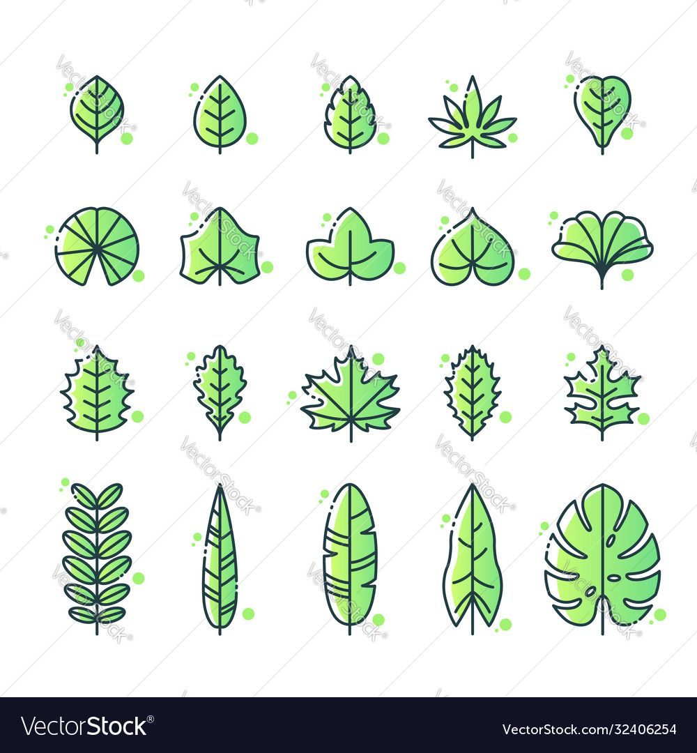 Different Types Leaf Icon Set Vector Image On Vectorstock Icon Set Vector Icon Set Vector Free