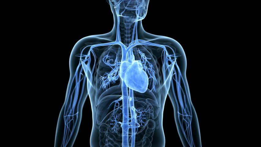 Heart Anatomy Medical 3d Animation