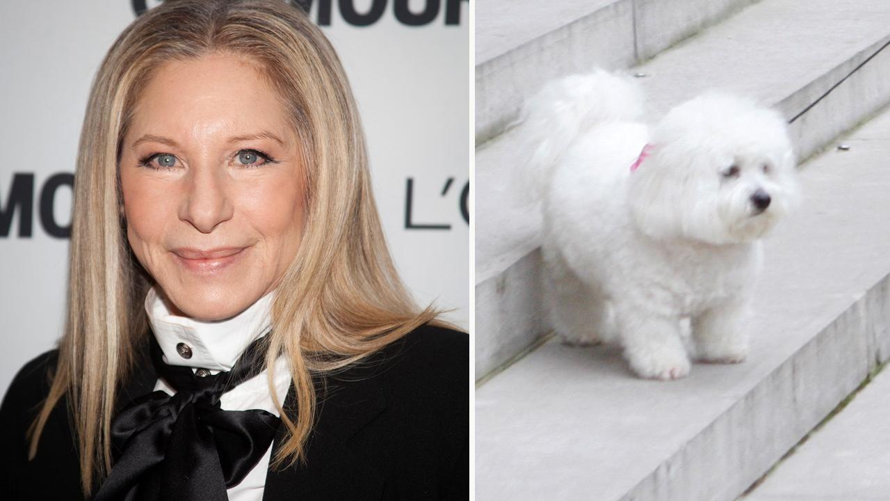 Barbra Streisand Fake Porn fox news: barbara streisand cloned her dog samantha twice