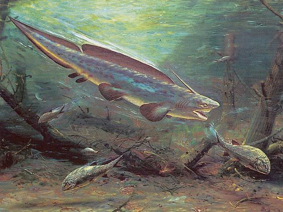 Xenacanthus - Zdeněk Burian | Primeval Flora & Fauna ...
