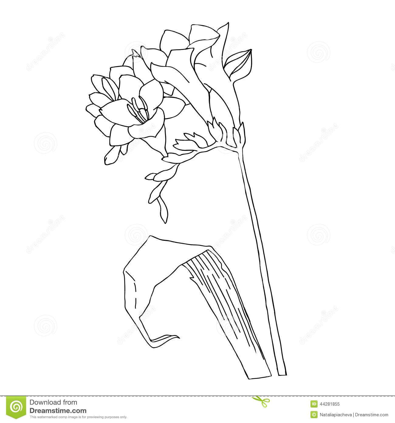 Freesia Illustration Freesia Sketch Black And White Stock Vector Image 44281855 Line Art Vector Illustration Vector Illustration