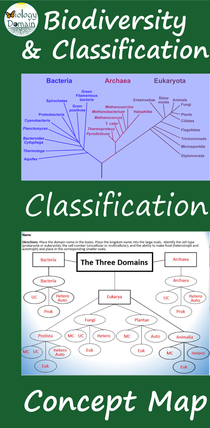 Domain And Kingdom Classification Concept Map And Graphic Organizer Concept Map Graphic Organizers Biology Lesson Plans