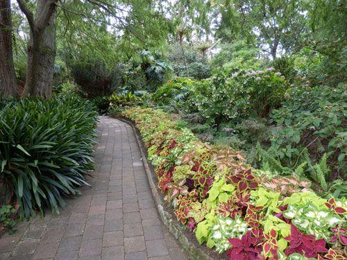 Beautiful Coleus Gardens   Google Search