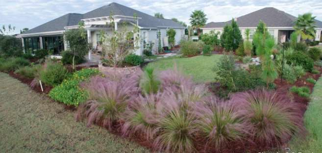 Transformation From Turf To Florida Native Plants