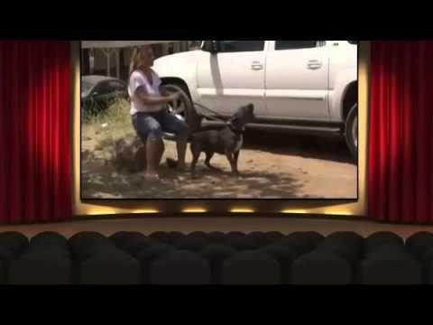 Pit Bulls And Parolees Season 2 Episode 6 Beware Of Dog Pit Bulls Parolees Beware Of Dog Pit Bulls