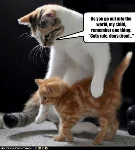New Cats Rule Memes Rule Memes Rules Memes Naps Memes
