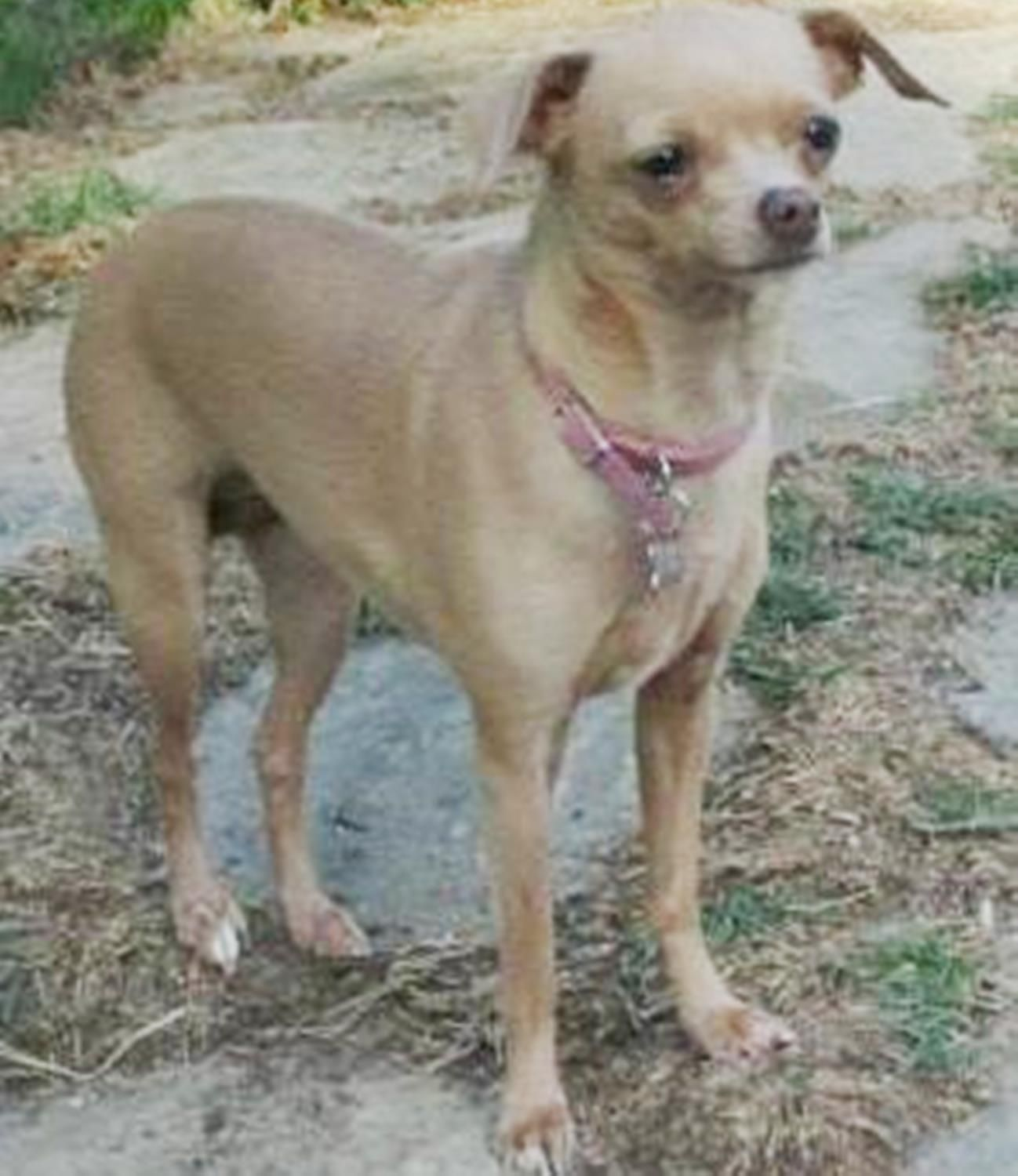 Lost Dog Female Allen Tx Usa 75002 Losing A Dog Dogs Pet