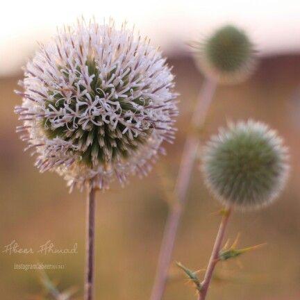 Pin By عبير الشهري On 1 Plants Flowers Dandelion
