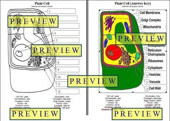 CELLS 1 PLANT CELL COLORING WORKSHEET WITH QUESTIONS