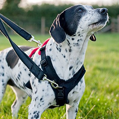 Help Em Up Harness With Hip Lift Dogs Bluedogdesigns Dog