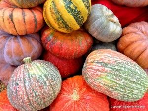 Unusual Pumpkins, Winter Squashes, Gourds from Seasonal Wisdom